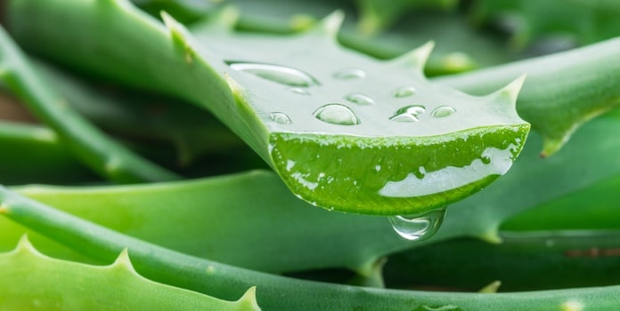 Inhaltsstoffe Aloe Propolis Creme