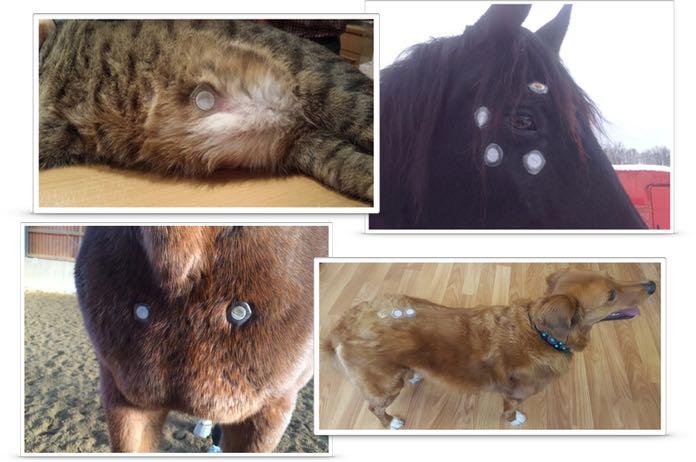 lifewave pflaster tiere pferde hunde katzen